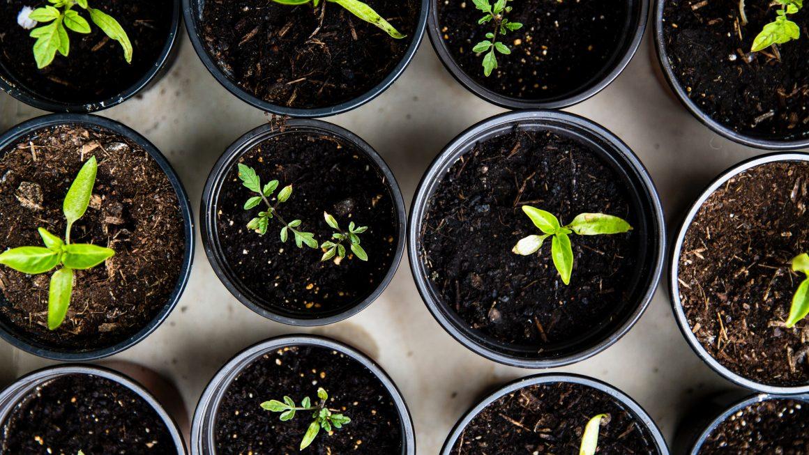Vegetable Seeds to Start Indoors